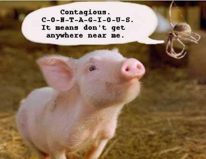 contagious-pig.jpg