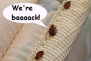 bed_bugs-are-an-epidemic