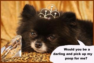 dog-pampered-final.jpg