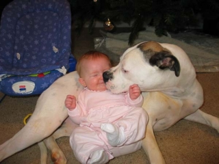 pit-bull-and-baby.jpg